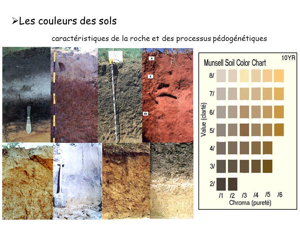 Les couleurs des sols caractéristiques de la roche et des processus pédogénétiques.