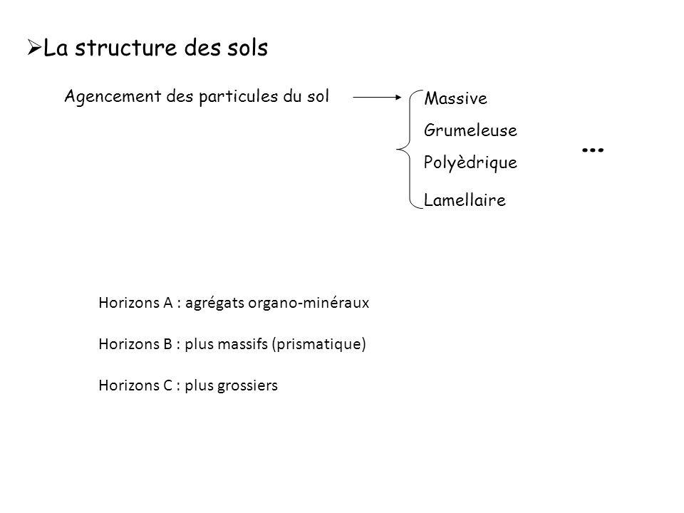 … La structure des sols Agencement des particules du sol Massive