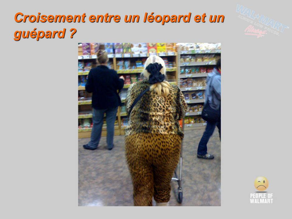 Croisement entre un léopard et un guépard
