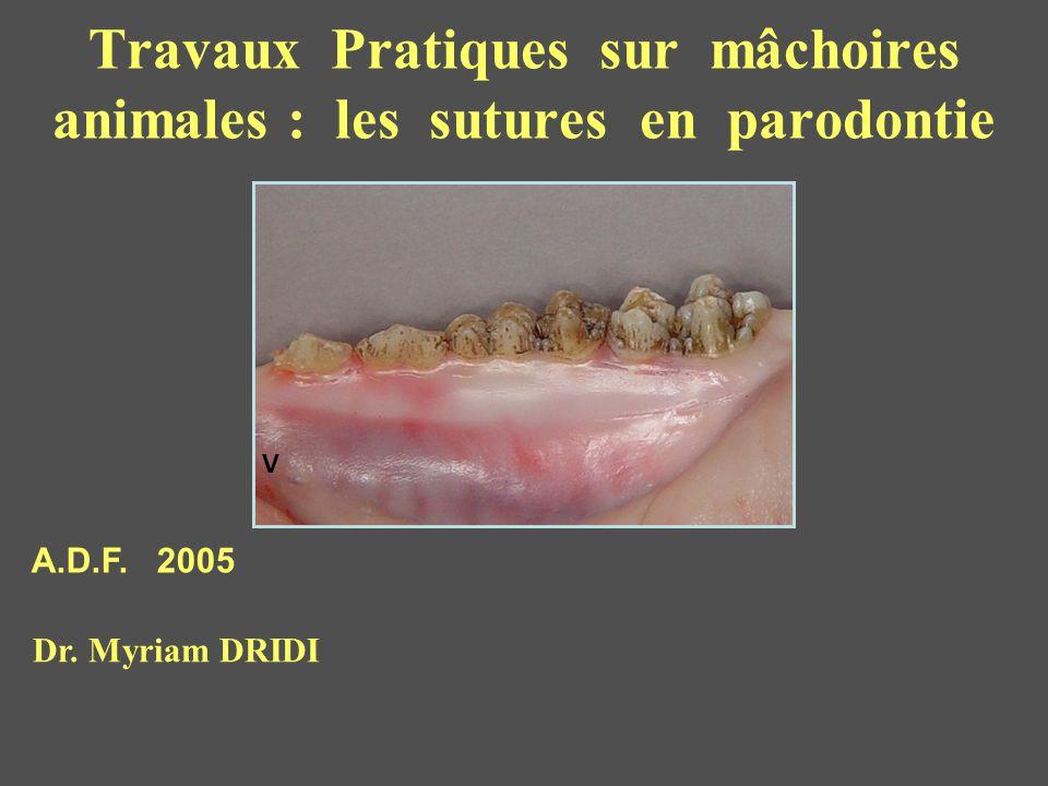 Travaux Pratiques sur mâchoires animales : les sutures en parodontie