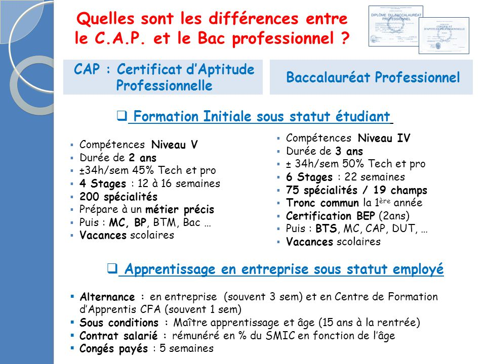 le C.A.P. et le Bac professionnel