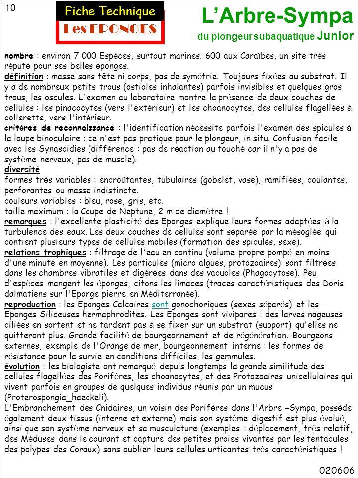 Les EPONGES Fiche Technique 020606
