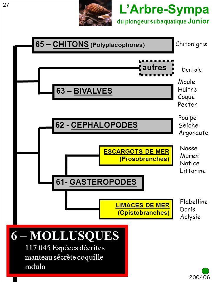 6 – MOLLUSQUES 65 – CHITONS (Polyplacophores) autres 63 – BIVALVES