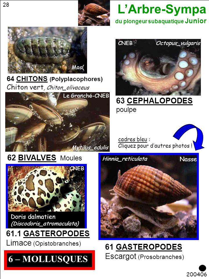 6 – MOLLUSQUES 63 CEPHALOPODES 62 BIVALVES Moules 61.1 GASTEROPODES