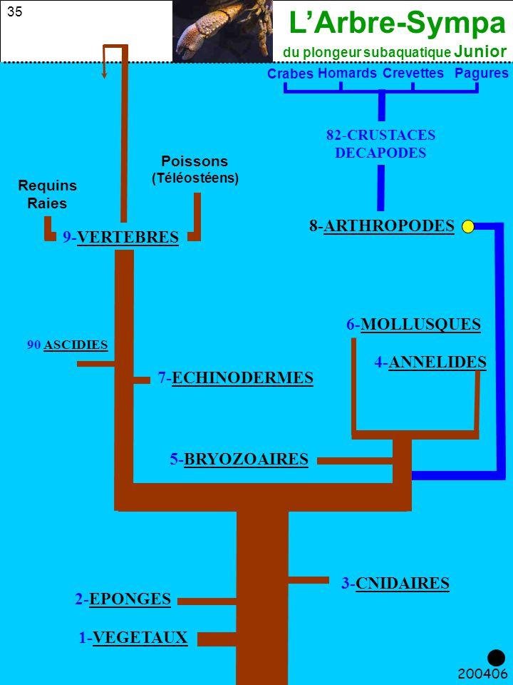 8-ARTHROPODES 9-VERTEBRES 6-MOLLUSQUES 4-ANNELIDES 7-ECHINODERMES