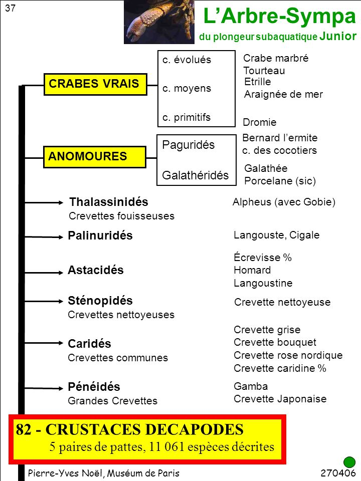 82 - CRUSTACES DECAPODES 5 paires de pattes, 11 061 espèces décrites