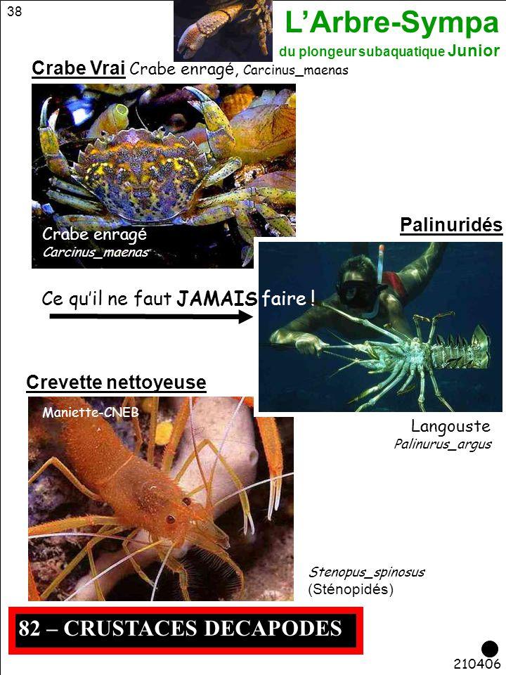 82 – CRUSTACES DECAPODES Crabe Vrai Crabe enragé, Carcinus_maenas