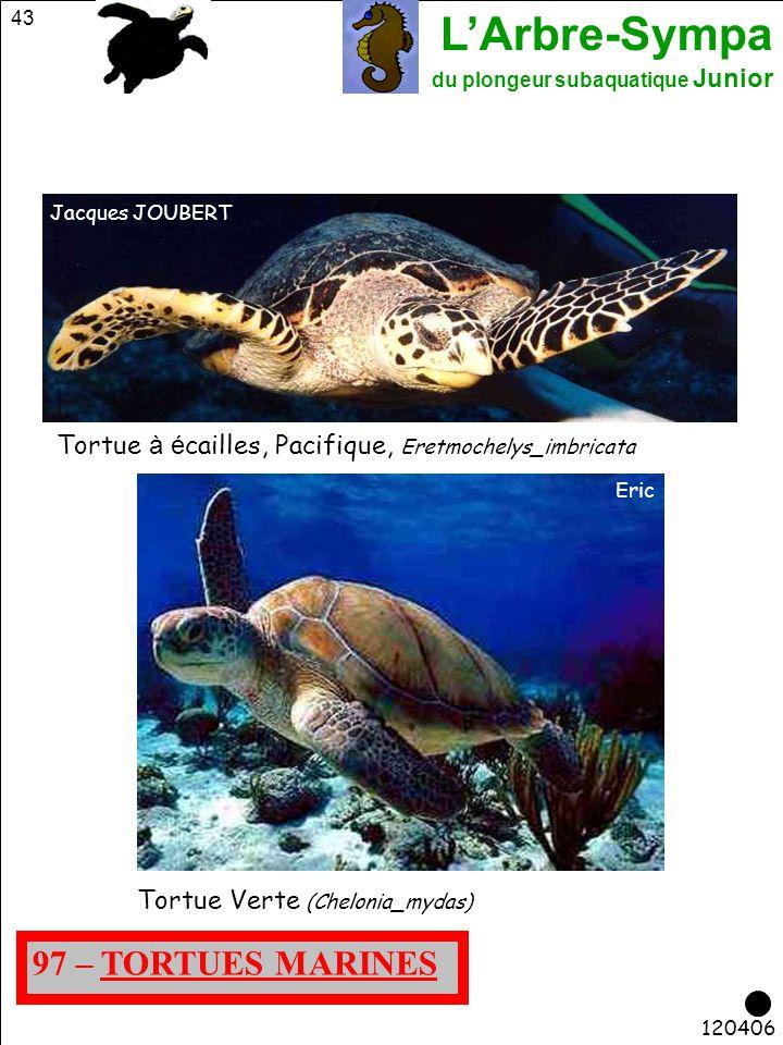 Jacques JOUBERT Tortue à écailles, Pacifique, Eretmochelys_imbricata. Eric. Tortue Verte (Chelonia_mydas)