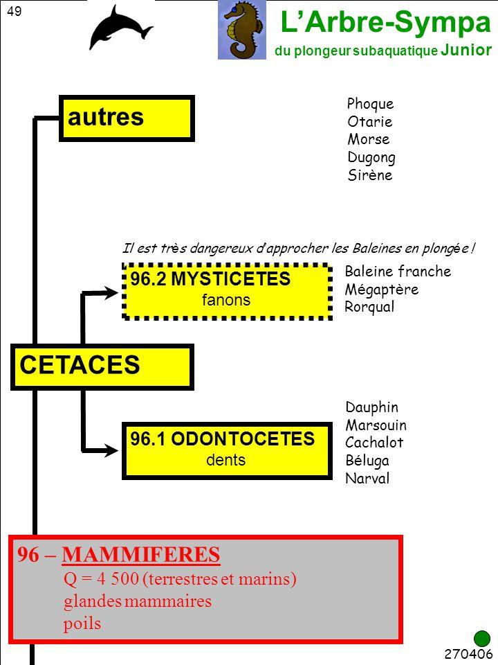 autres CETACES 96 – MAMMIFERES 96.2 MYSTICETES 96.1 ODONTOCETES