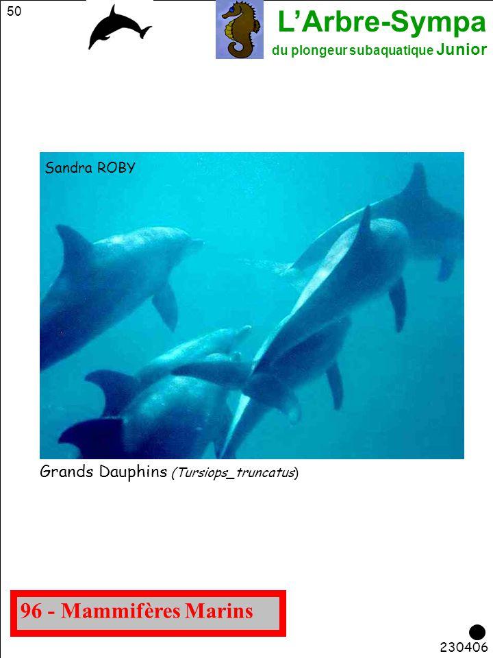 96 - Mammifères Marins Grands Dauphins (Tursiops_truncatus)