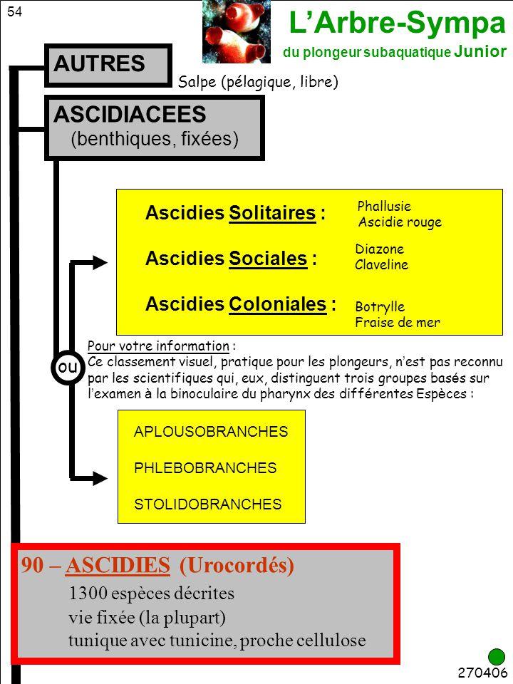 90 – ASCIDIES (Urocordés) 1300 espèces décrites