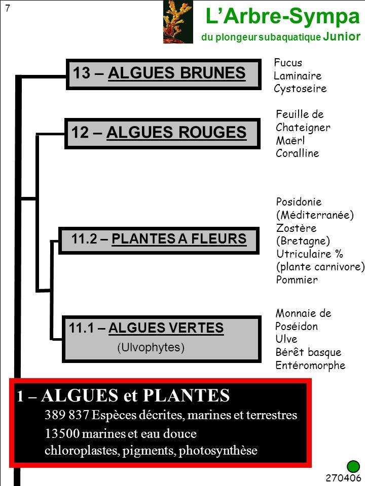 13 – ALGUES BRUNES 12 – ALGUES ROUGES (Ulvophytes)