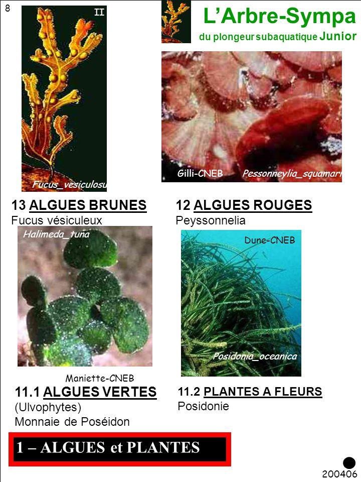 1 – ALGUES et PLANTES 13 ALGUES BRUNES 12 ALGUES ROUGES