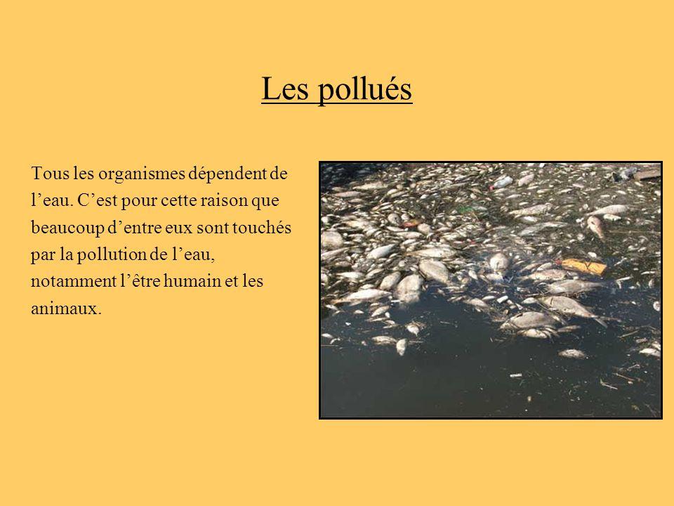 Les pollués Tous les organismes dépendent de
