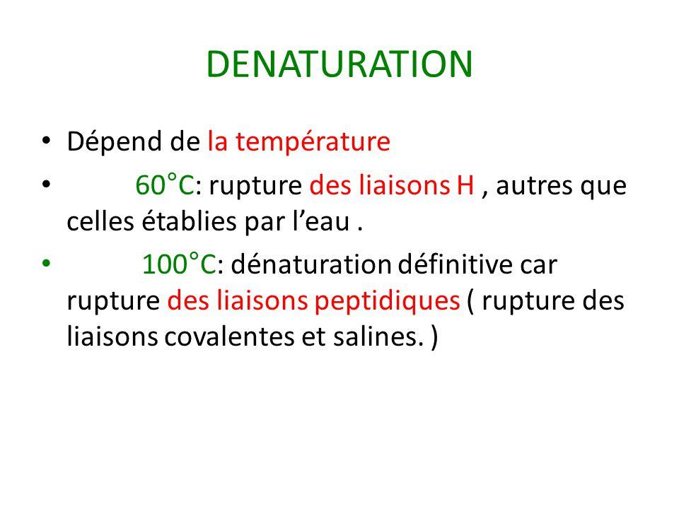 DENATURATION Dépend de la température