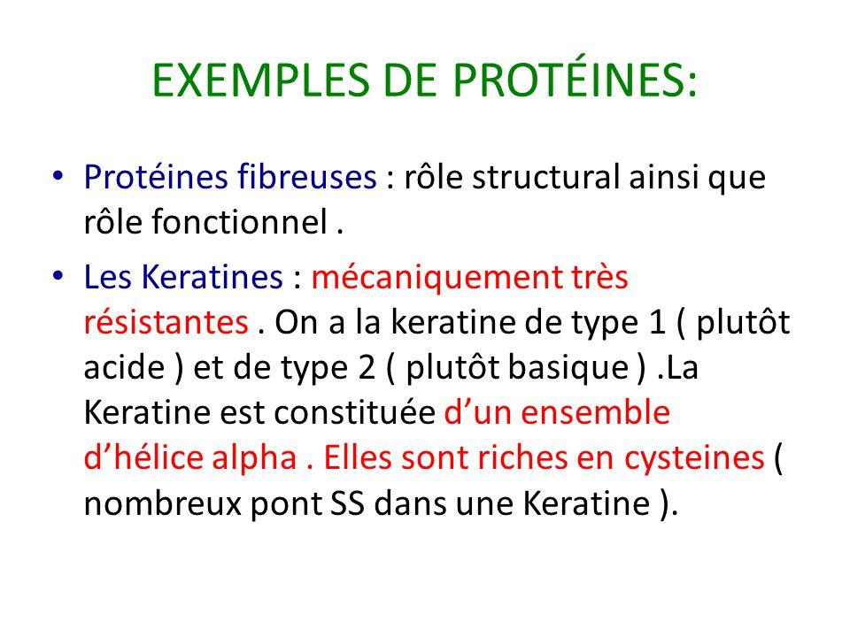 EXEMPLES DE PROTÉINES: