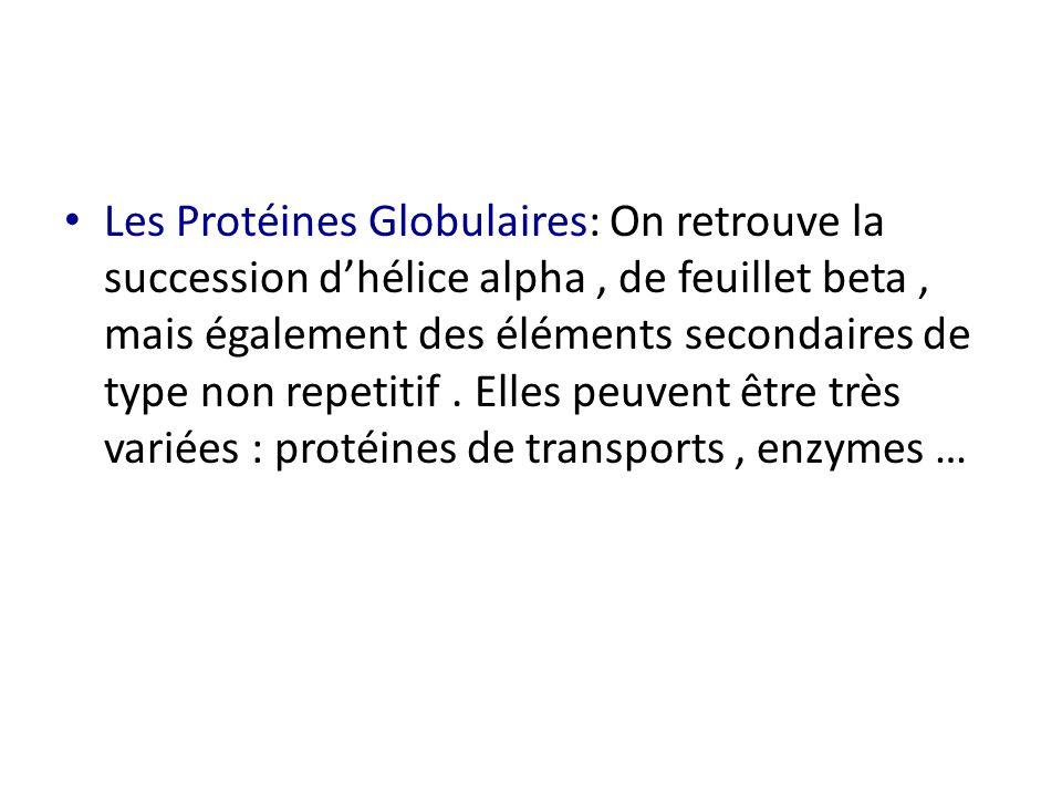 Les Protéines Globulaires: On retrouve la succession d'hélice alpha , de feuillet beta , mais également des éléments secondaires de type non repetitif .