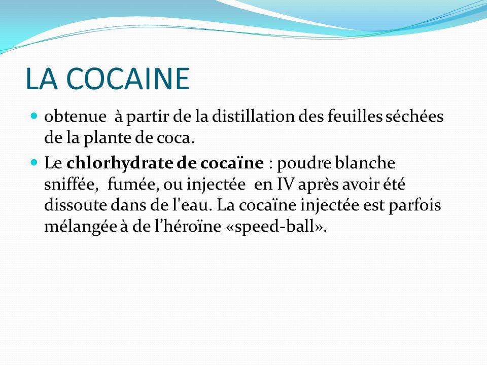LA COCAINE obtenue à partir de la distillation des feuilles séchées de la plante de coca.