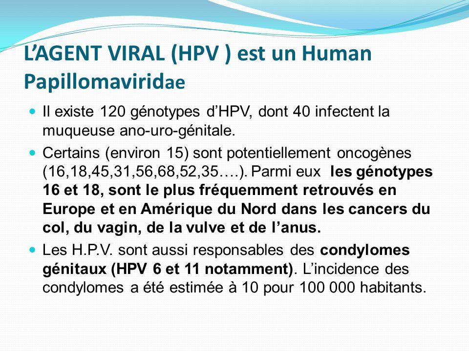 L'AGENT VIRAL (HPV ) est un Human Papillomaviridae