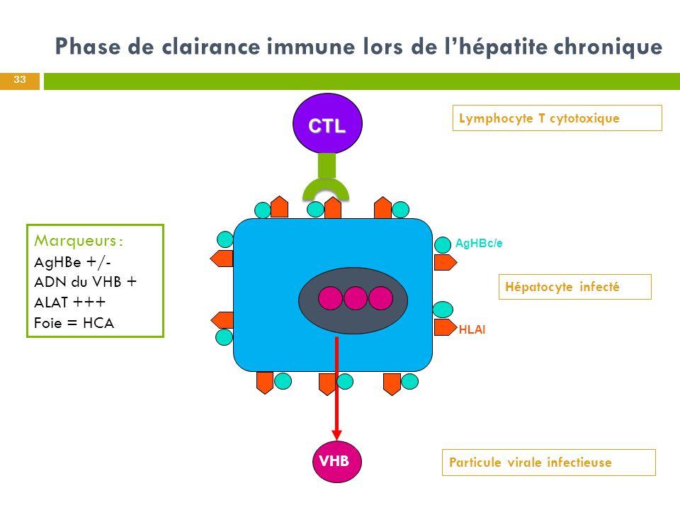 Phase de clairance immune lors de l'hépatite chronique