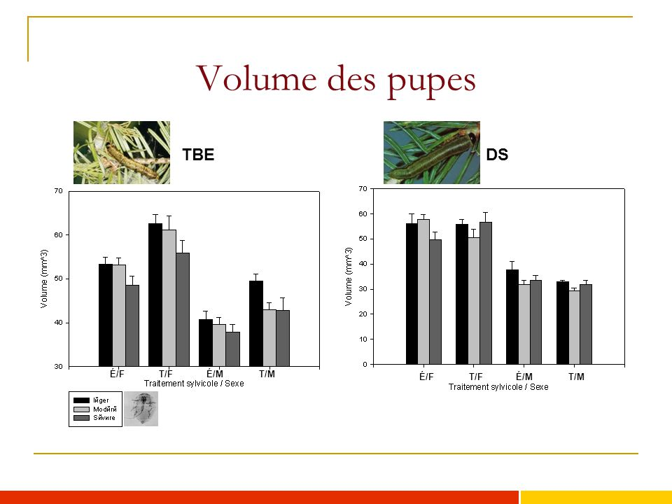 Volume des pupes TBE DS TF=females from thinned stand