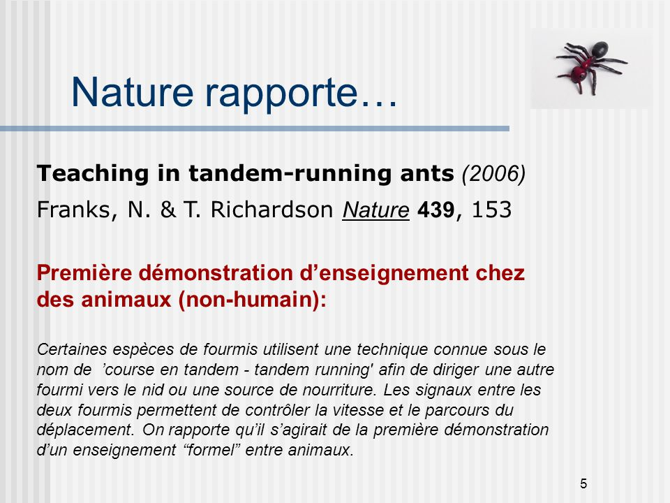 Nature rapporte… Teaching in tandem-running ants (2006)