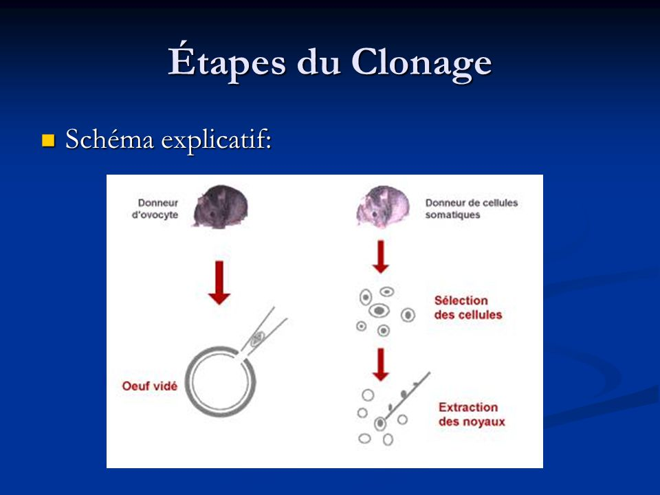 Étapes du Clonage Schéma explicatif: