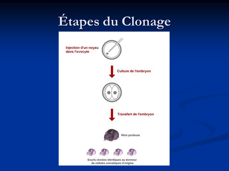 Étapes du Clonage