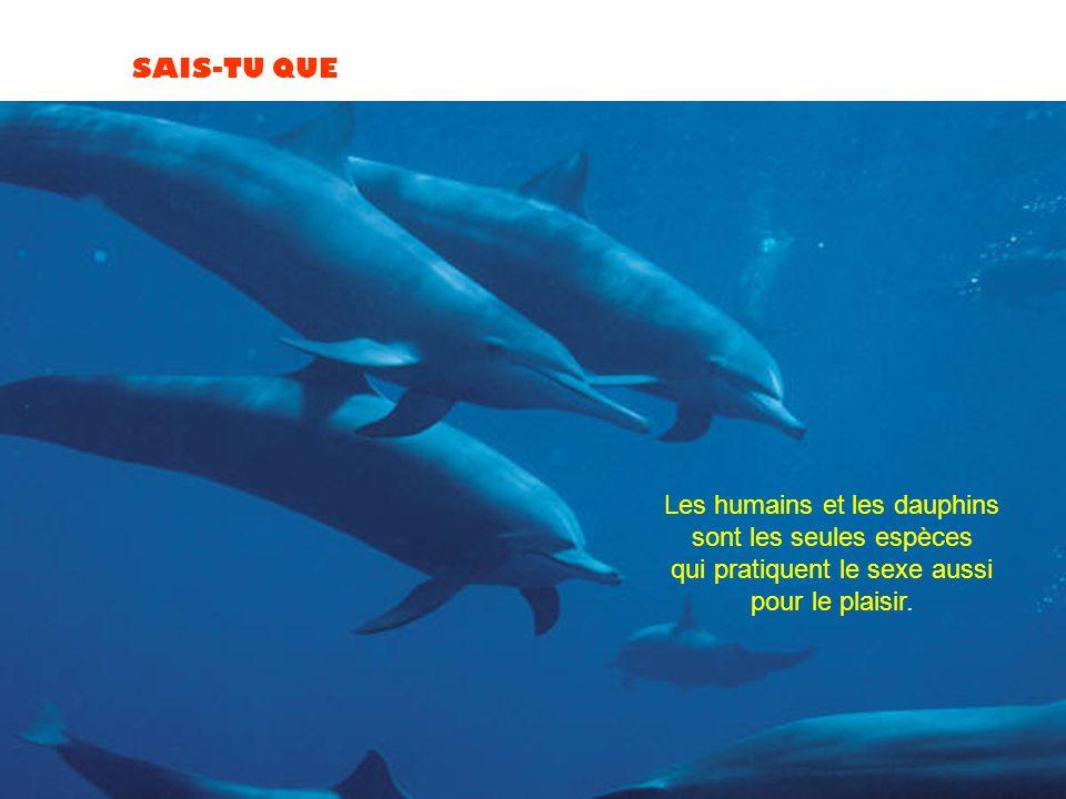 Les humains et les dauphins sont les seules espèces