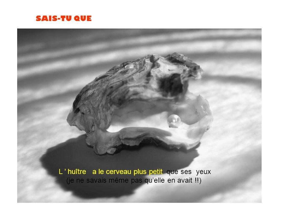 L ' huître a le cerveau plus petit que ses yeux