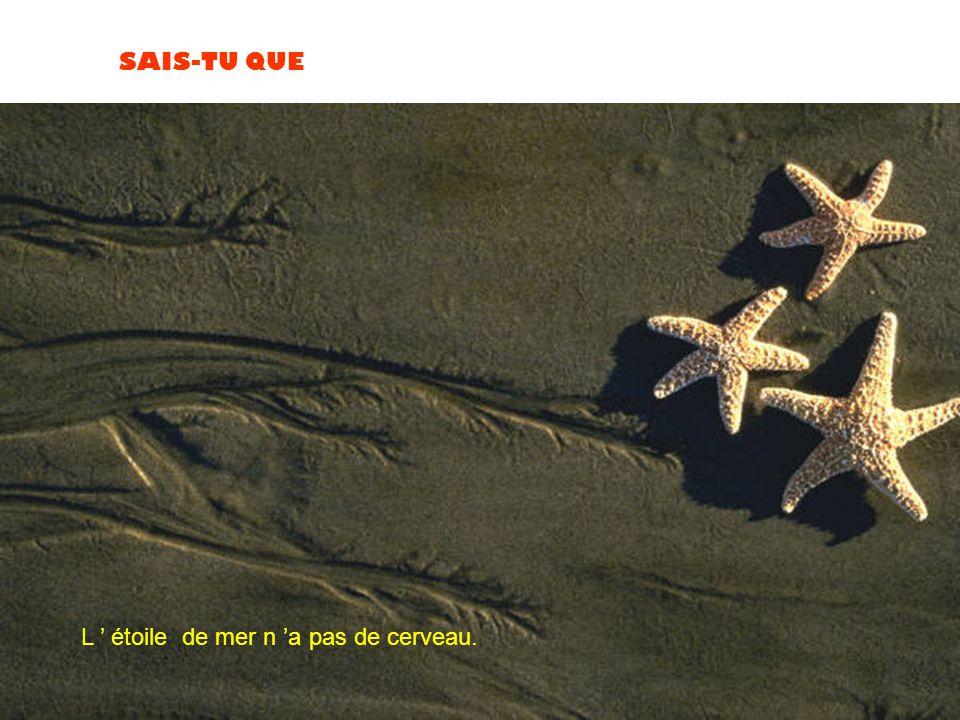 L ' étoile de mer n 'a pas de cerveau.