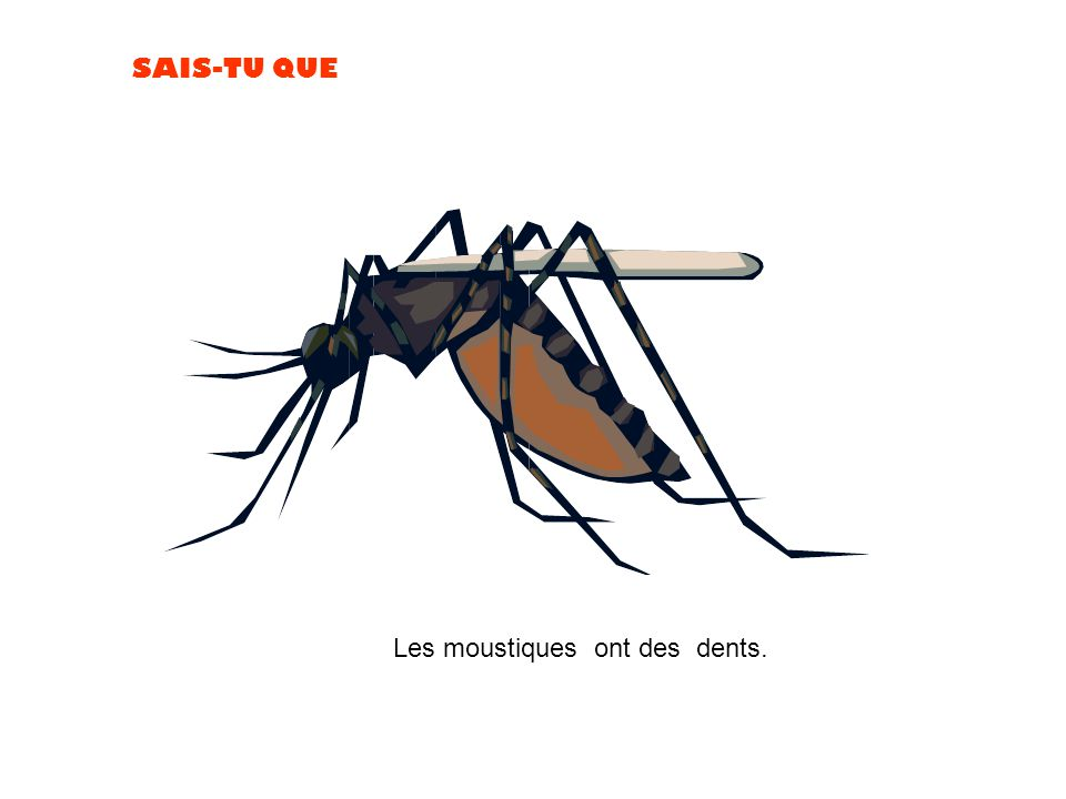 Les moustiques ont des dents.