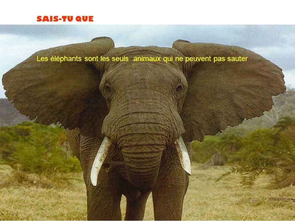 Les éléphants sont les seuls animaux qui ne peuvent pas sauter