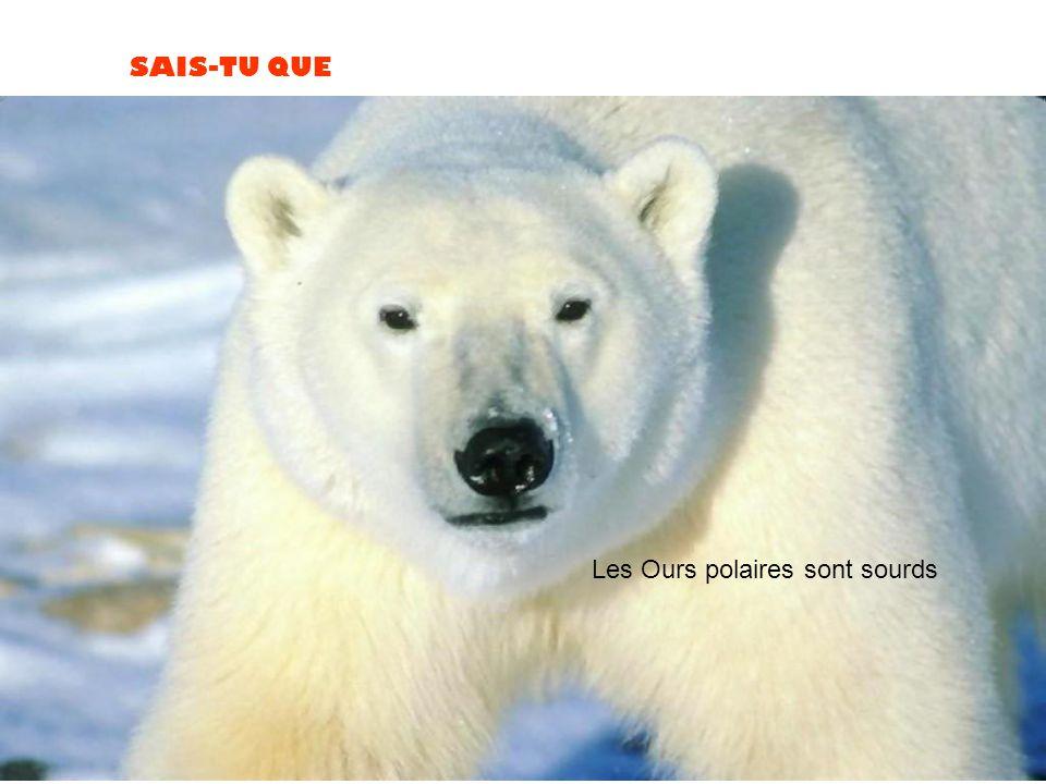 Les Ours polaires sont sourds
