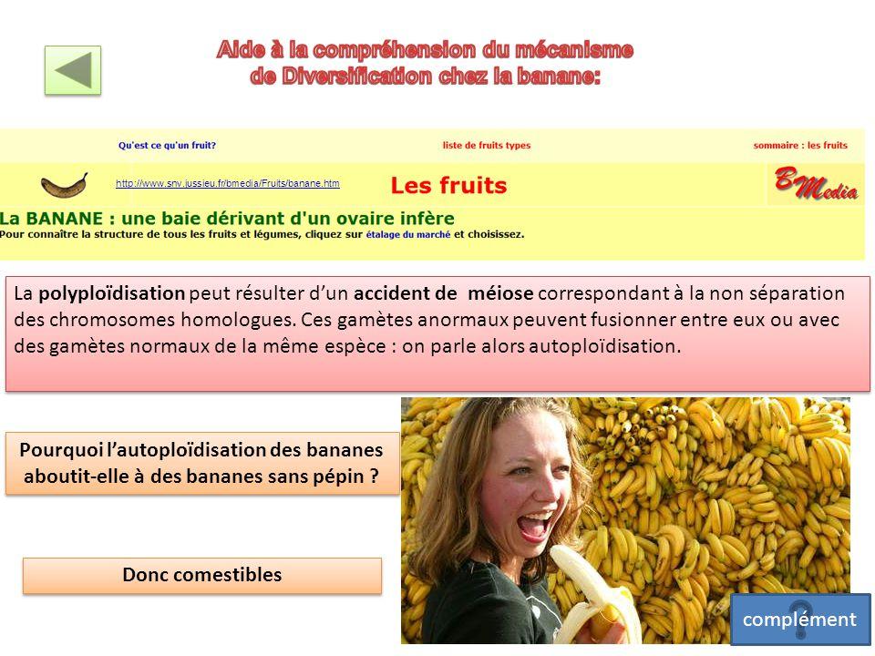 Aide à la compréhension du mécanisme de Diversification chez la banane: