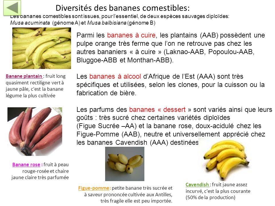 Diversités des bananes comestibles: