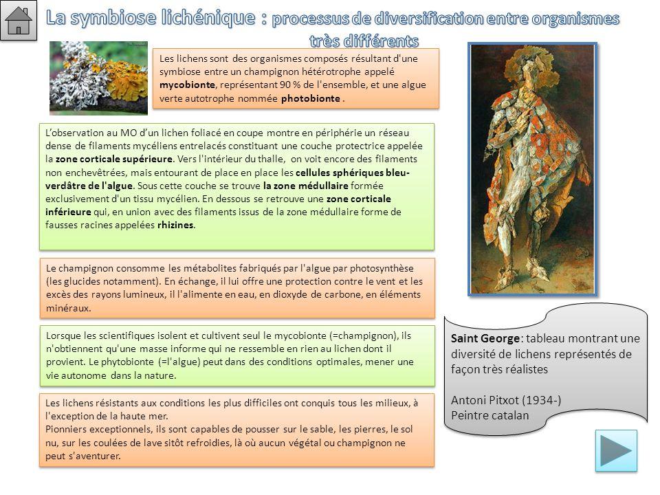 La symbiose lichénique : processus de diversification entre organismes