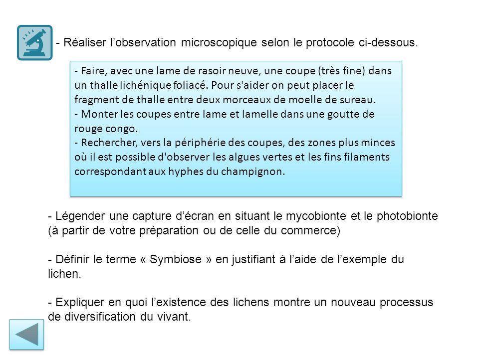 - Réaliser l'observation microscopique selon le protocole ci-dessous.