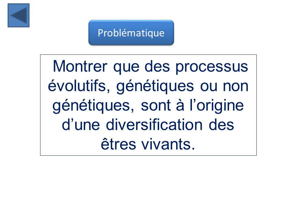 Problématique Montrer que des processus évolutifs, génétiques ou non génétiques, sont à l'origine d'une diversification des êtres vivants.