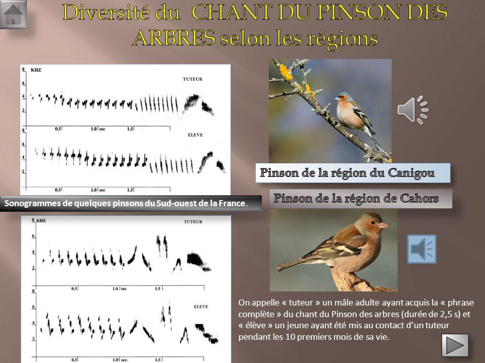 Diversité du CHANT DU PINSON DES ARBRES selon les régions
