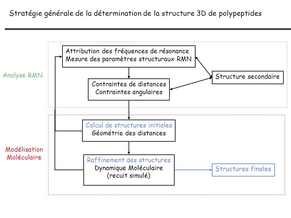 Stratégie générale de la détermination de la structure 3D de polypeptides
