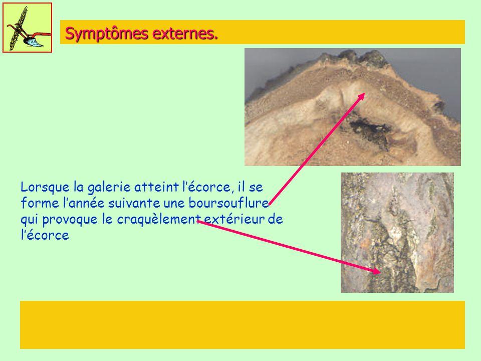 Symptômes externes.
