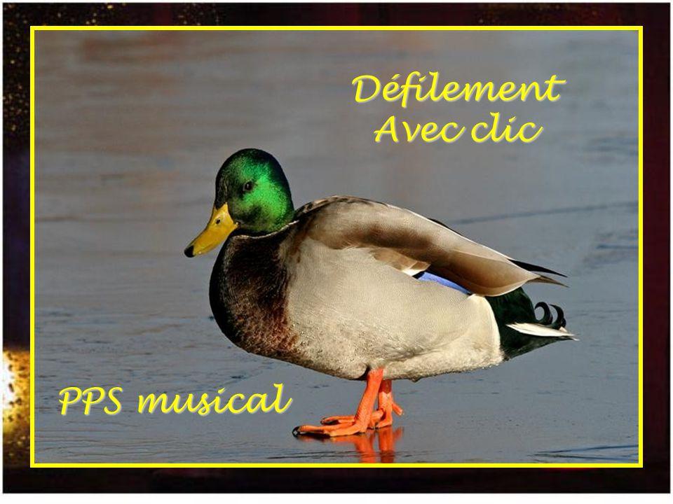 Défilement Avec clic PPS musical