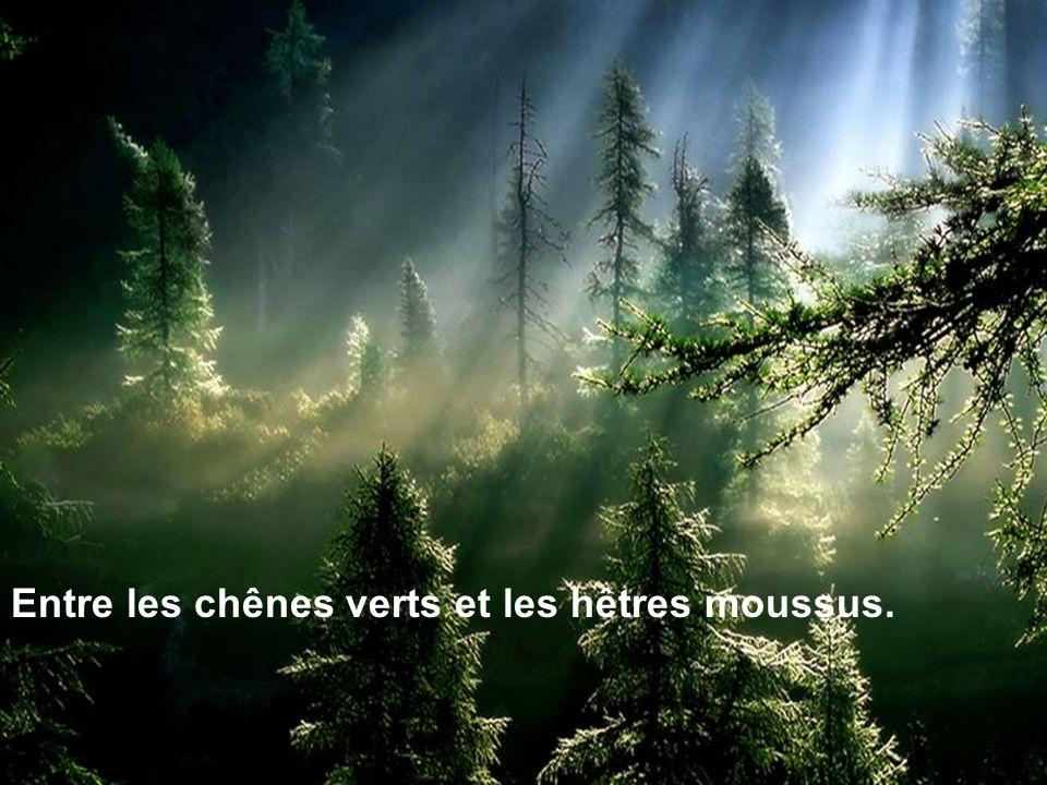 Entre les chênes verts et les hêtres moussus.