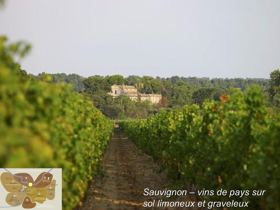 Sauvignon – vins de pays sur sol limoneux et graveleux