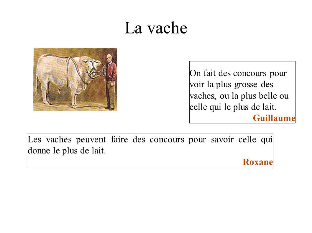 La vache On fait des concours pour voir la plus grosse des vaches, ou la plus belle ou celle qui le plus de lait.