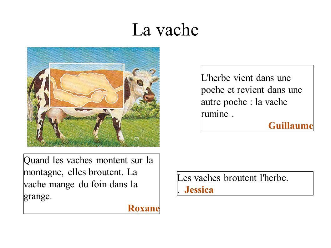 La vache L herbe vient dans une poche et revient dans une autre poche : la vache rumine . Guillaume.