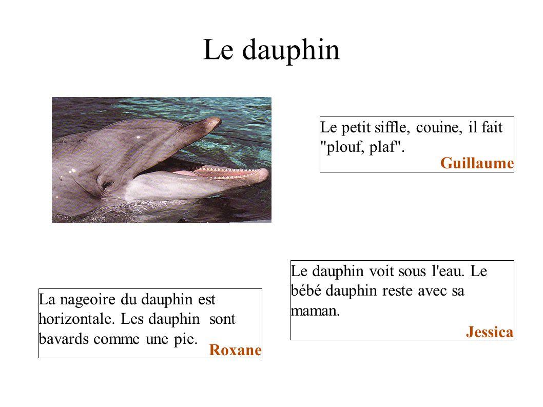 Le dauphin Le petit siffle, couine, il fait plouf, plaf . Guillaume