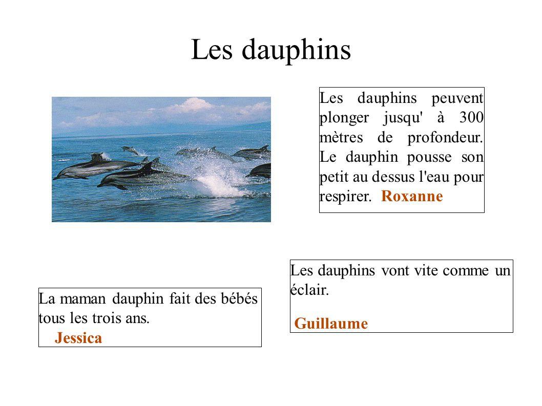 Les dauphins Les dauphins peuvent plonger jusqu à 300 mètres de profondeur. Le dauphin pousse son petit au dessus l eau pour respirer. Roxanne.