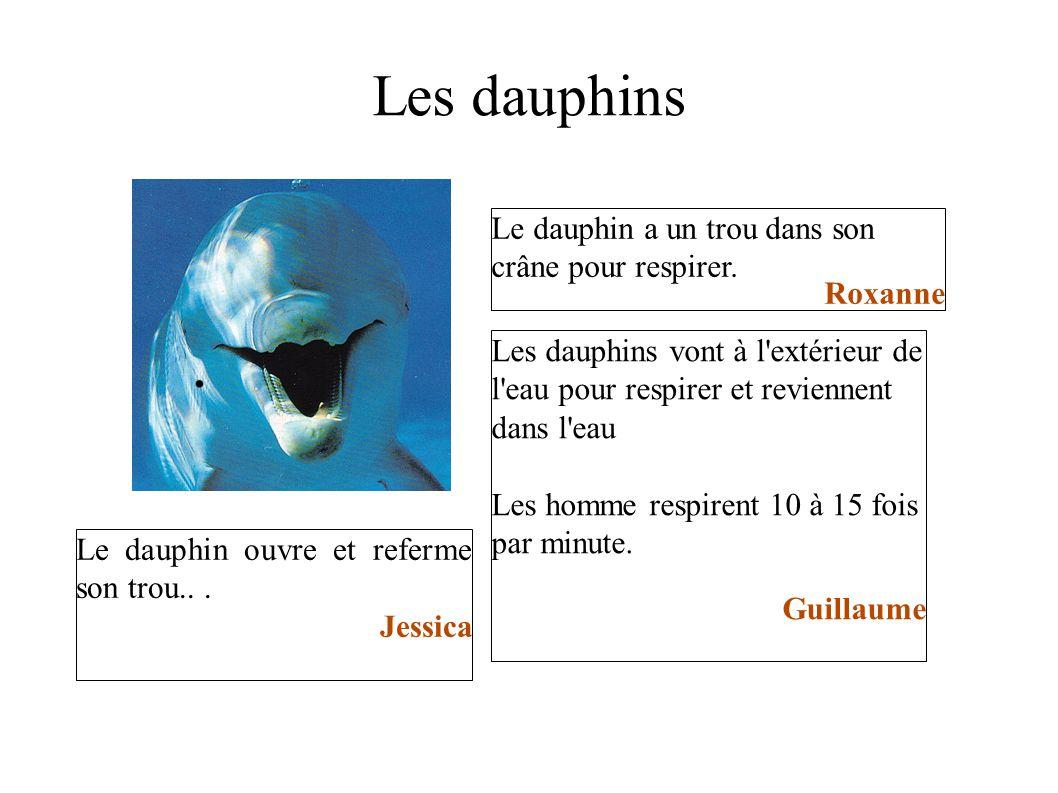 Les dauphins Le dauphin a un trou dans son crâne pour respirer.
